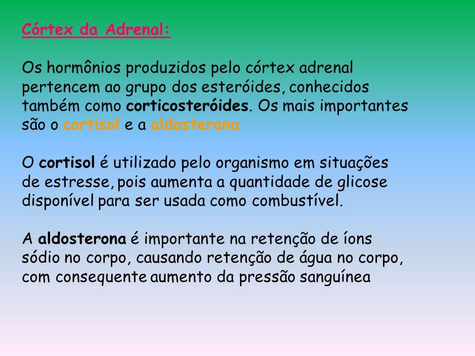 Córtex da Adrenal: Os hormônios produzidos pelo córtex adrenal pertencem ao grupo dos esteróides, conhecidos também como corticosteróides. Os mais imp