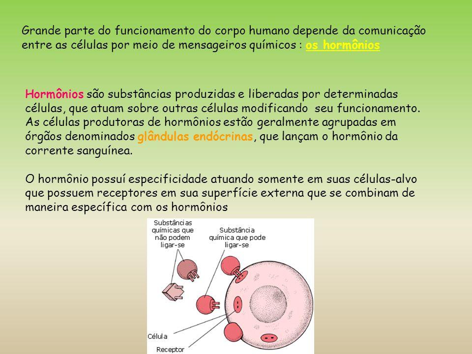 Grande parte do funcionamento do corpo humano depende da comunicação entre as células por meio de mensageiros químicos : os hormônios Hormônios são su