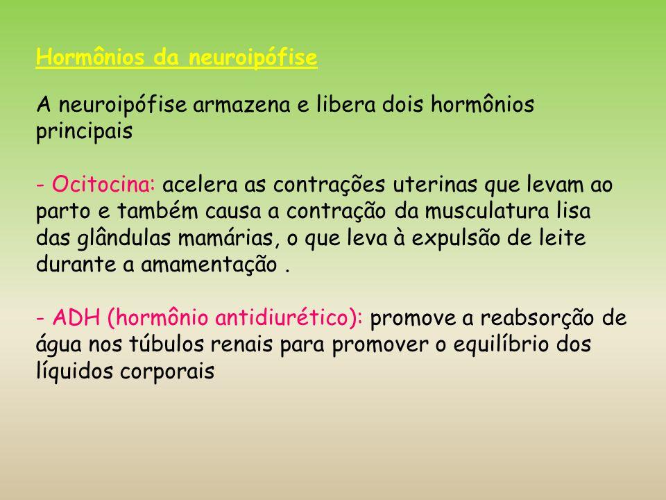 Hormônios da neuroipófise A neuroipófise armazena e libera dois hormônios principais - Ocitocina: acelera as contrações uterinas que levam ao parto e