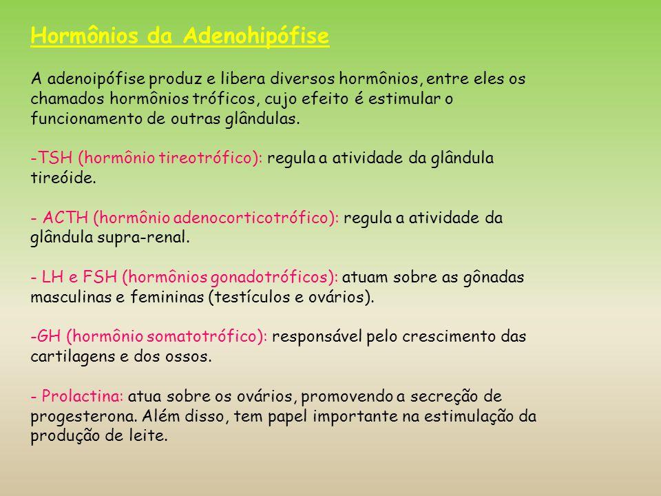 Hormônios da Adenohipófise A adenoipófise produz e libera diversos hormônios, entre eles os chamados hormônios tróficos, cujo efeito é estimular o fun