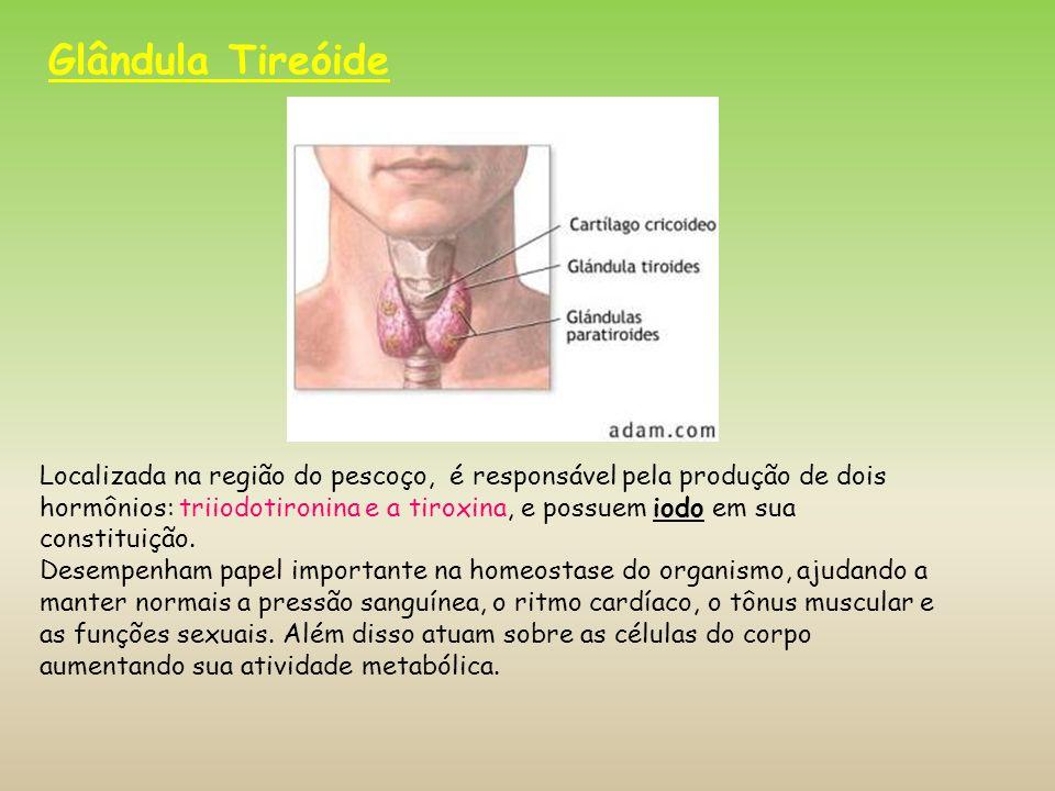 Calcitonina: outro importante hormônio tireoidiano que atua diminuindo a quantidade de cálcio no sangue.