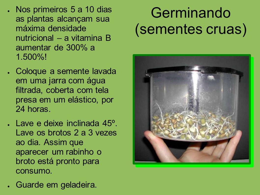 Germinando (sementes cruas) Nos primeiros 5 a 10 dias as plantas alcançam sua máxima densidade nutricional – a vitamina B aumentar de 300% a 1.500%! C