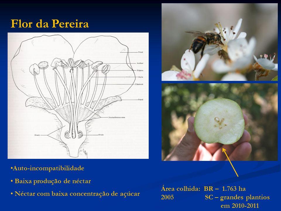 Flor da Pereira Auto-incompatibilidade Baixa produção de néctar Néctar com baixa concentração de açúcar Área colhida: BR – 1.763 ha 2005 SC – grandes