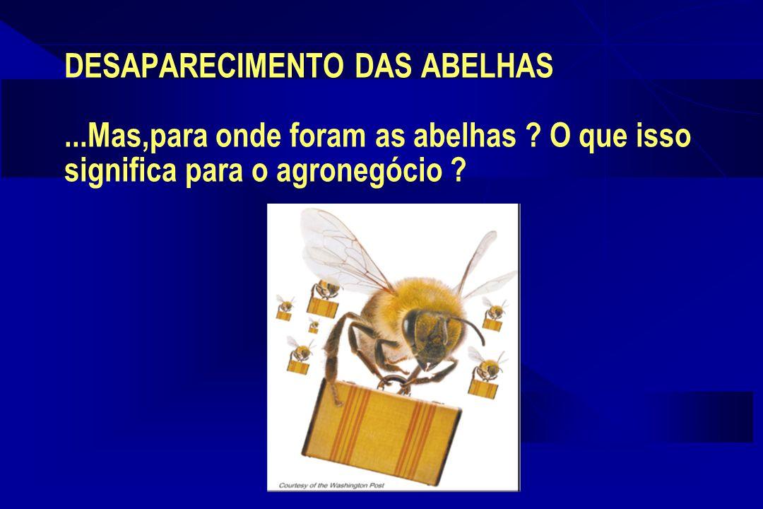 DESAPARECIMENTO DAS ABELHAS...Mas,para onde foram as abelhas .