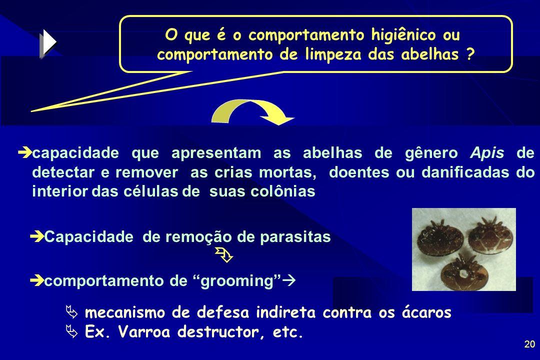 20 O que é o comportamento higiênico ou comportamento de limpeza das abelhas .