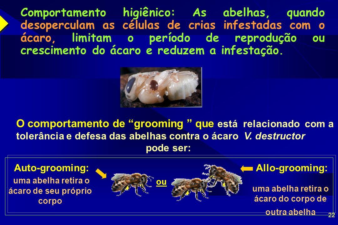 22 Comportamento higiênico: As abelhas, quando desoperculam as células de crias infestadas com o ácaro, limitam o período de reprodução ou crescimento do ácaro e reduzem a infestação.