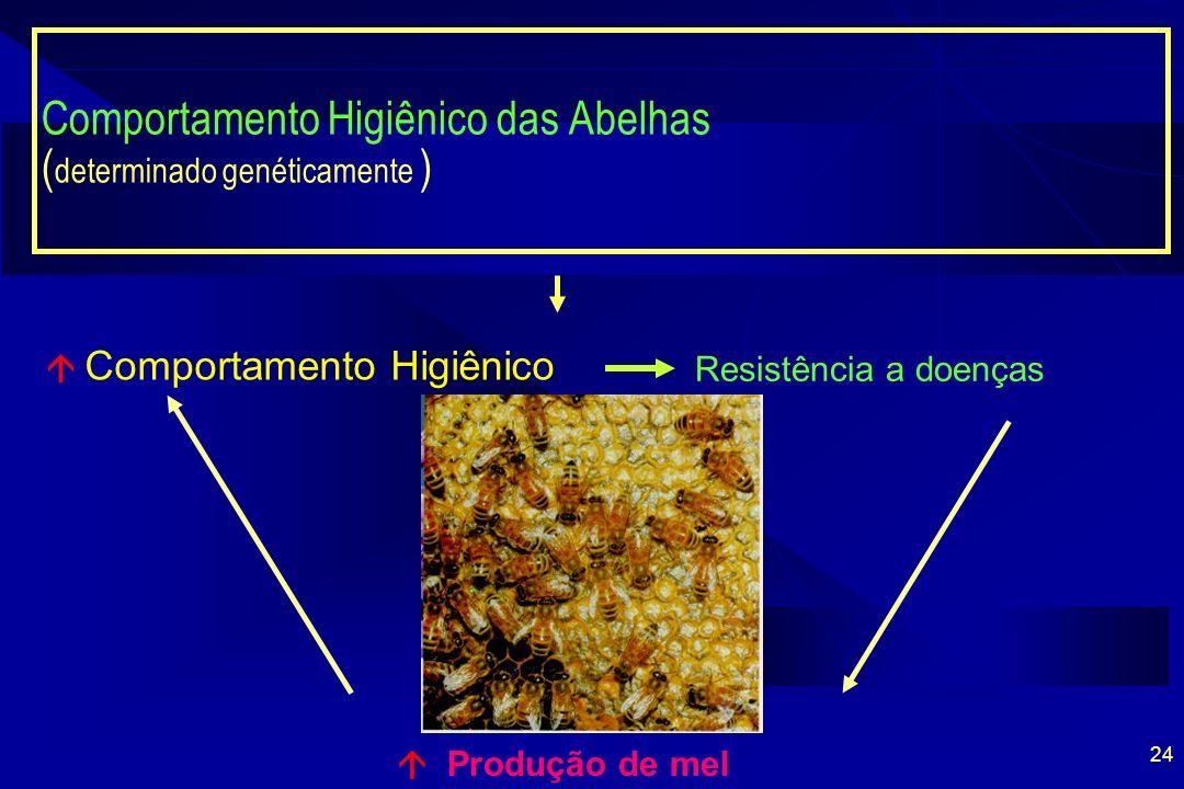 24 Comportamento Higiênico das Abelhas ( determinado genéticamente ) Produção de mel Comportamento Higiênico Resistência a doenças