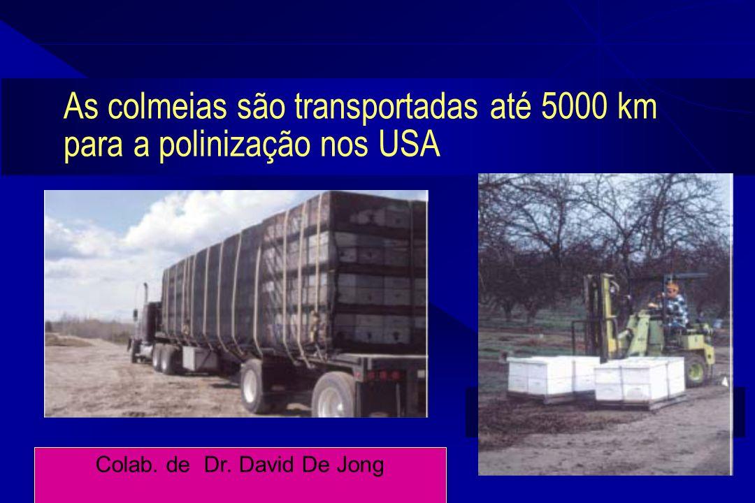 9 As colmeias são transportadas até 5000 km para a polinização nos USA Colab. de Dr. David De Jong