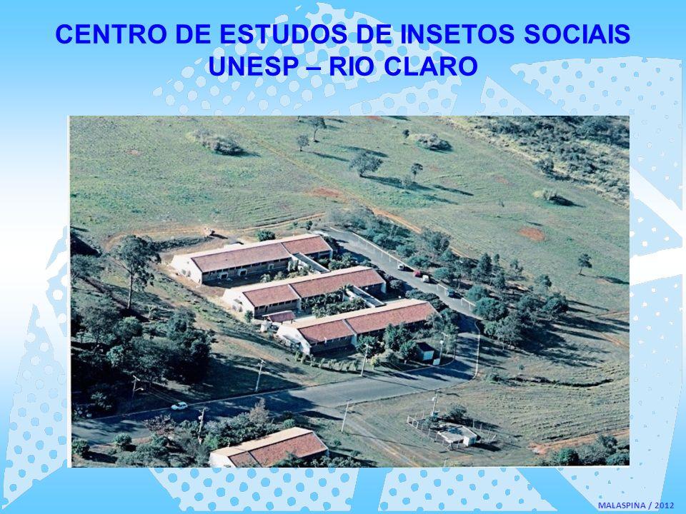 MALASPINA / 2012 CENTRO DE ESTUDOS DE INSETOS SOCIAIS UNESP – RIO CLARO