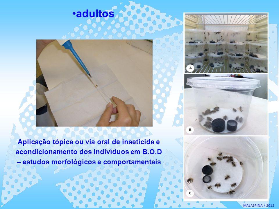 MALASPINA / 2012 adultos Aplicação tópica ou via oral de inseticida e acondicionamento dos indivíduos em B.O.D – estudos morfológicos e comportamentai
