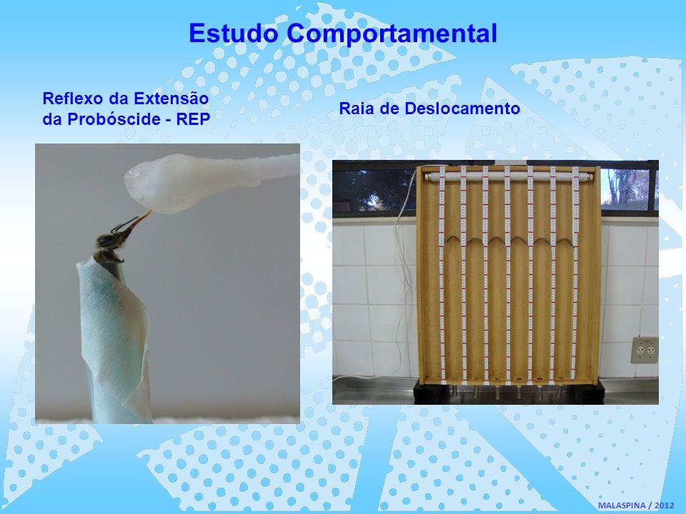 MALASPINA / 2012 Estudo Comportamental Reflexo da Extensão da Probóscide - REP Raia de Deslocamento