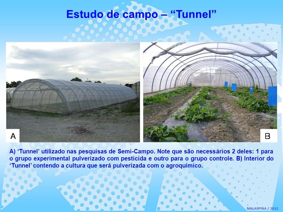 MALASPINA / 2012 A) Tunnel utilizado nas pesquisas de Semi-Campo. Note que são necessários 2 deles: 1 para o grupo experimental pulverizado com pestic