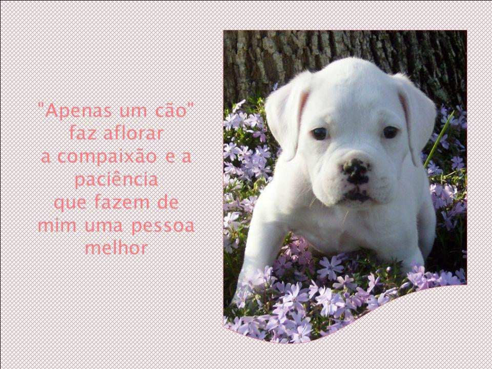 Apenas um cão faz aflorar a compaixão e a paciência que fazem de mim uma pessoa melhor