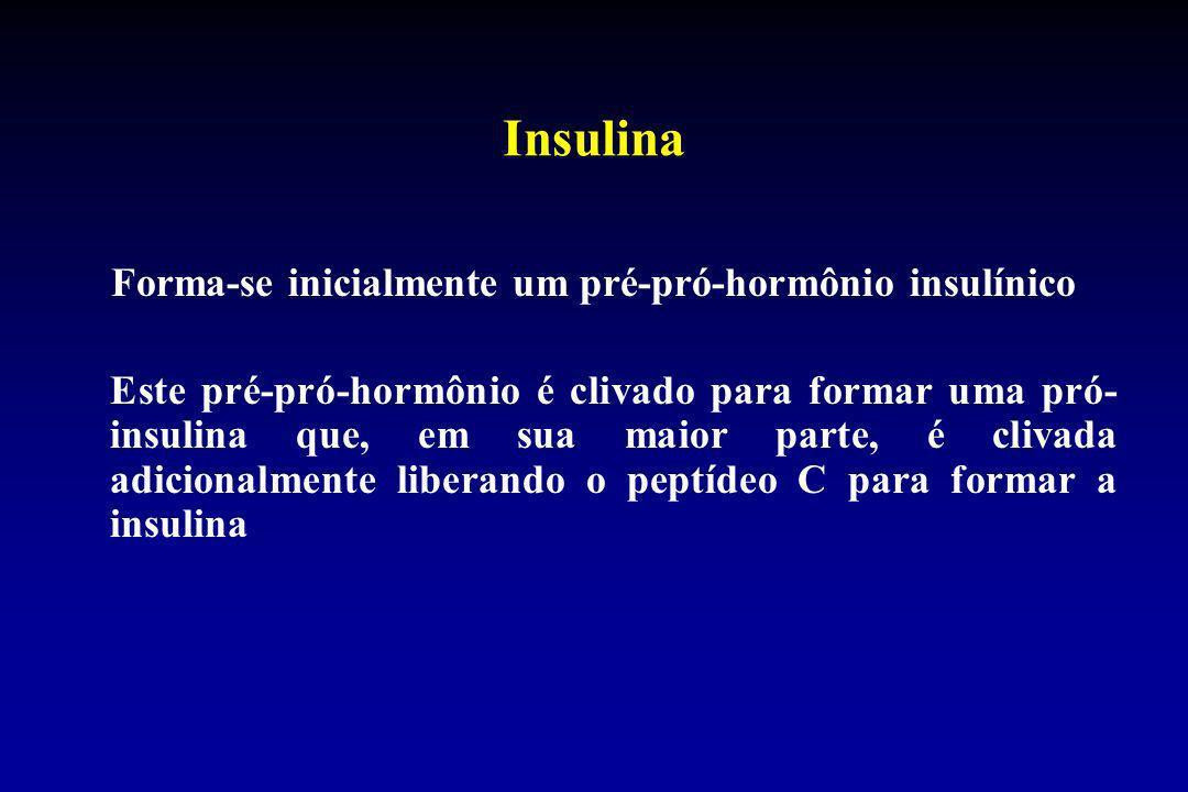 Insulina Forma-se inicialmente um pré-pró-hormônio insulínico Este pré-pró-hormônio é clivado para formar uma pró- insulina que, em sua maior parte, é