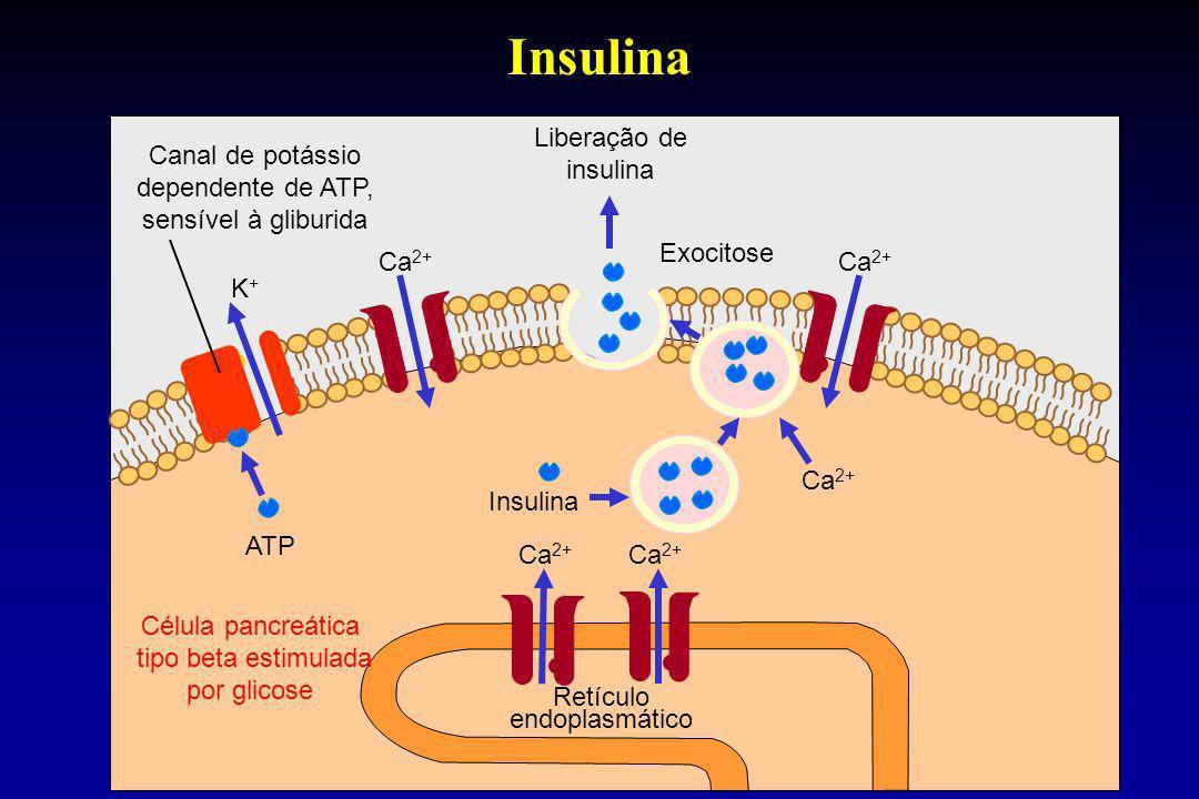 Insulina Canal de potássio dependente de ATP, sensível à gliburida K+K+ Ca 2+ Insulina Liberação de insulina Exocitose Retículo endoplasmático ATP Cél