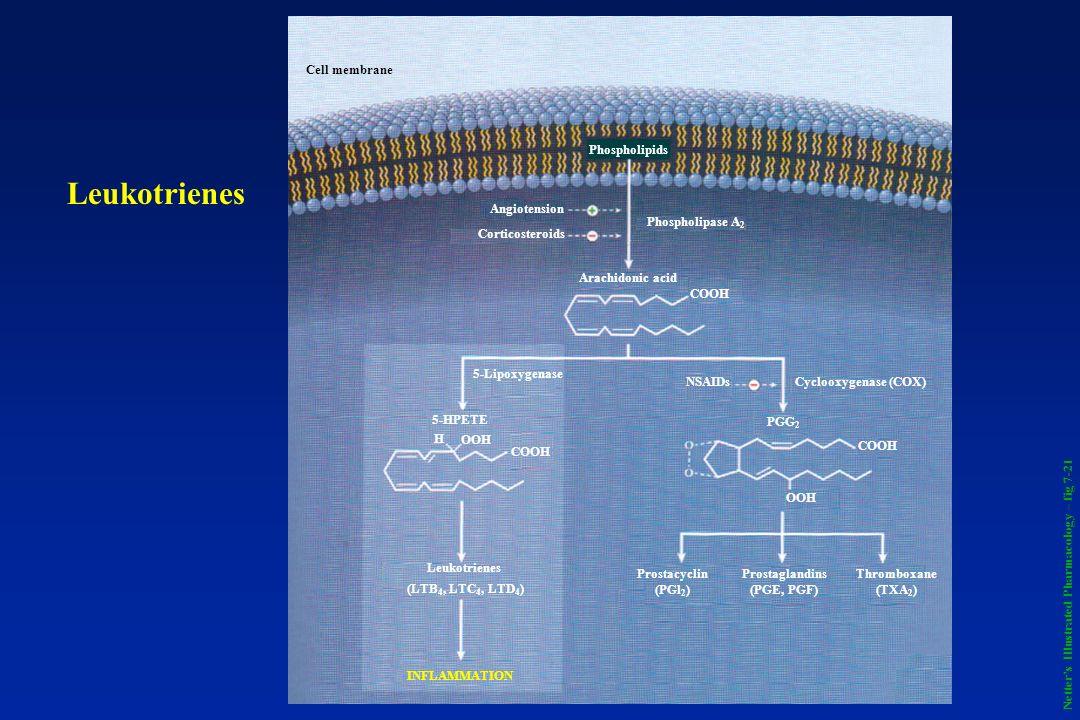 Phospholipids Phospholipase A 2 Angiotension Corticosteroids Arachidonic acid COOH PGG 2 NSAIDsCyclooxygenase (COX) COOH OOH Thromboxane (TXA 2 ) Pros