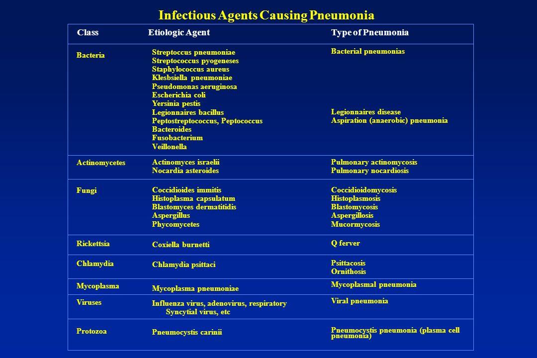 Bacteria Streptoccus pneumoniae Streptococcus pyogeneses Staphylococcus aureus Klesbsiella pneumoniae Pseudomonas aeruginosa Escherichia coli Yersinia