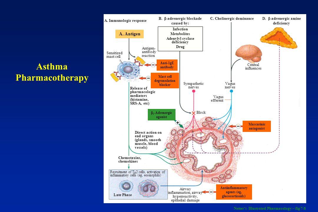 ASMA - Definição É uma doença inflamatória crônica das vias aéreas na qual muitas células desempenham um papel importante, incluindo os mastócitos e os eosinófilos.