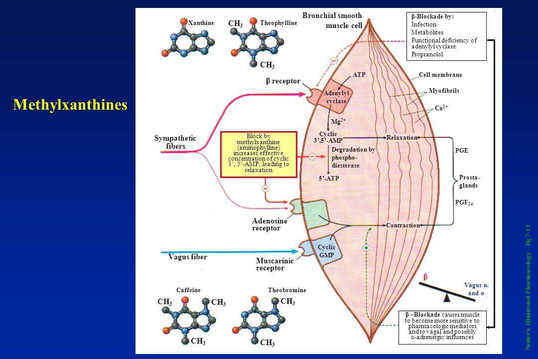 Netters Illustrated Pharmacology – fig 7-22 Leukotriene Antagonists