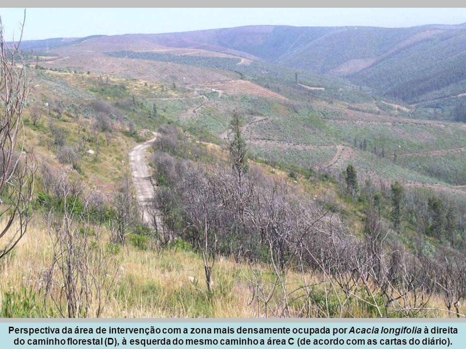 Perspectiva da área de intervenção com a zona mais densamente ocupada por Acacia longifolia à direita do caminho florestal (D), à esquerda do mesmo ca