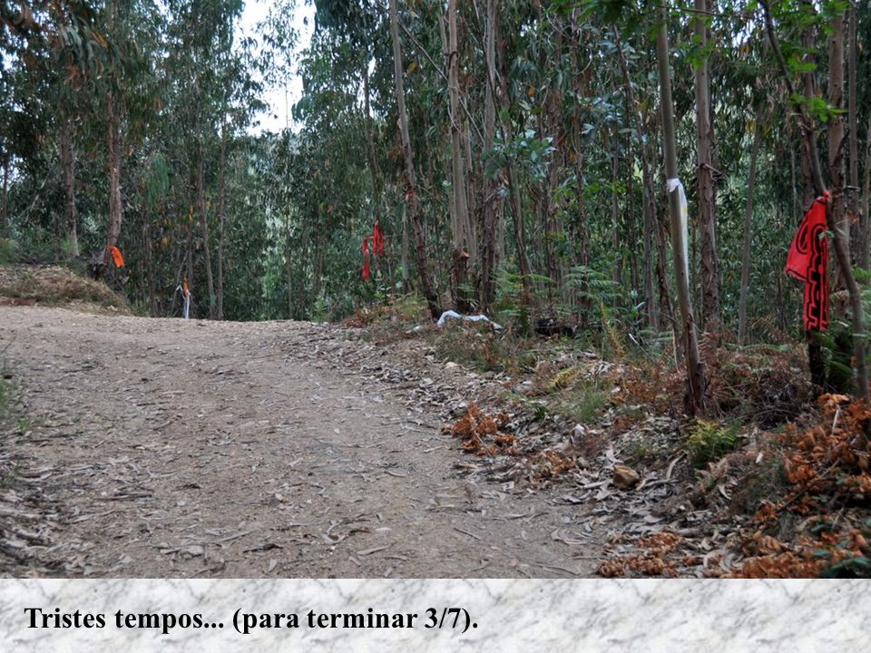 Área alvo dos primeiros trabalhos no dia 17 de Julho.