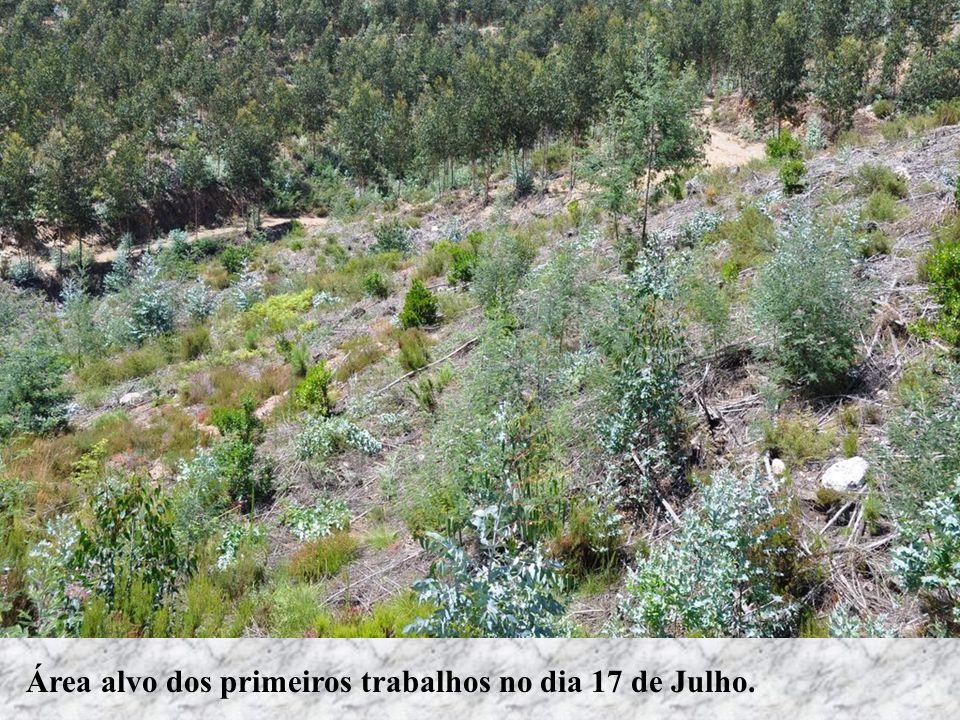Um medronheiro plantado em 2009Um sobreiro plantado em 2009