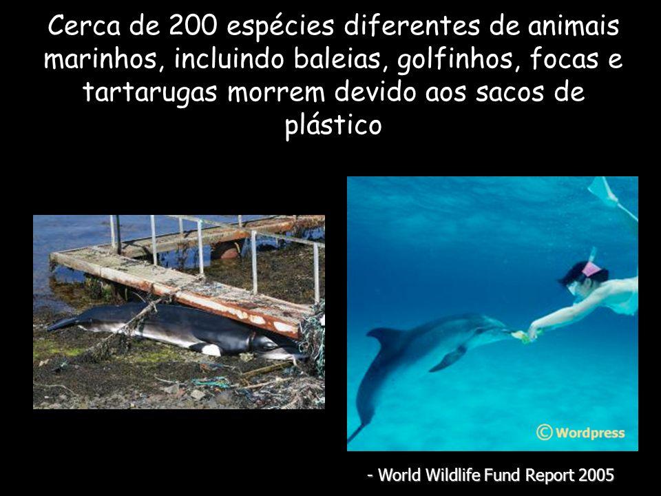 Cerca de 200 espécies diferentes de animais marinhos, incluindo baleias, golfinhos, focas e tartarugas morrem devido aos sacos de plástico - World Wildlife Fund Report 2005
