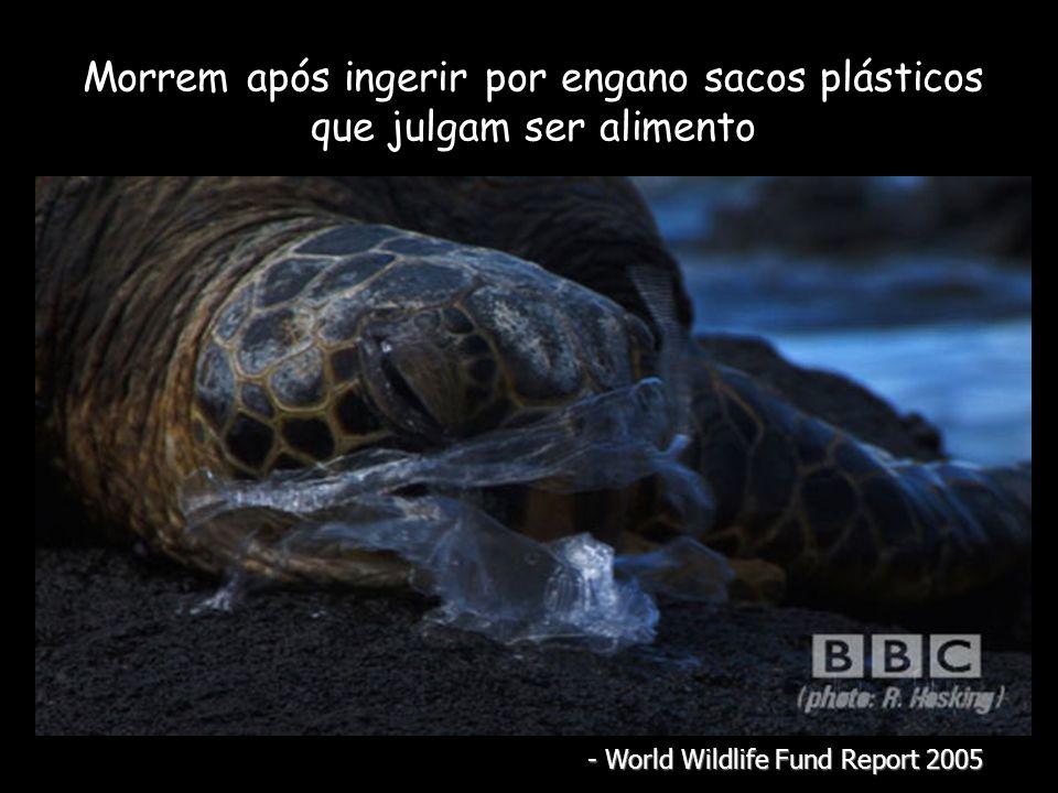 Morrem após ingerir por engano sacos plásticos que julgam ser alimento - World Wildlife Fund Report 2005