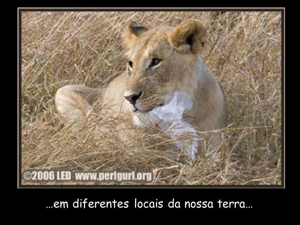…em diferentes locais da nossa terra…
