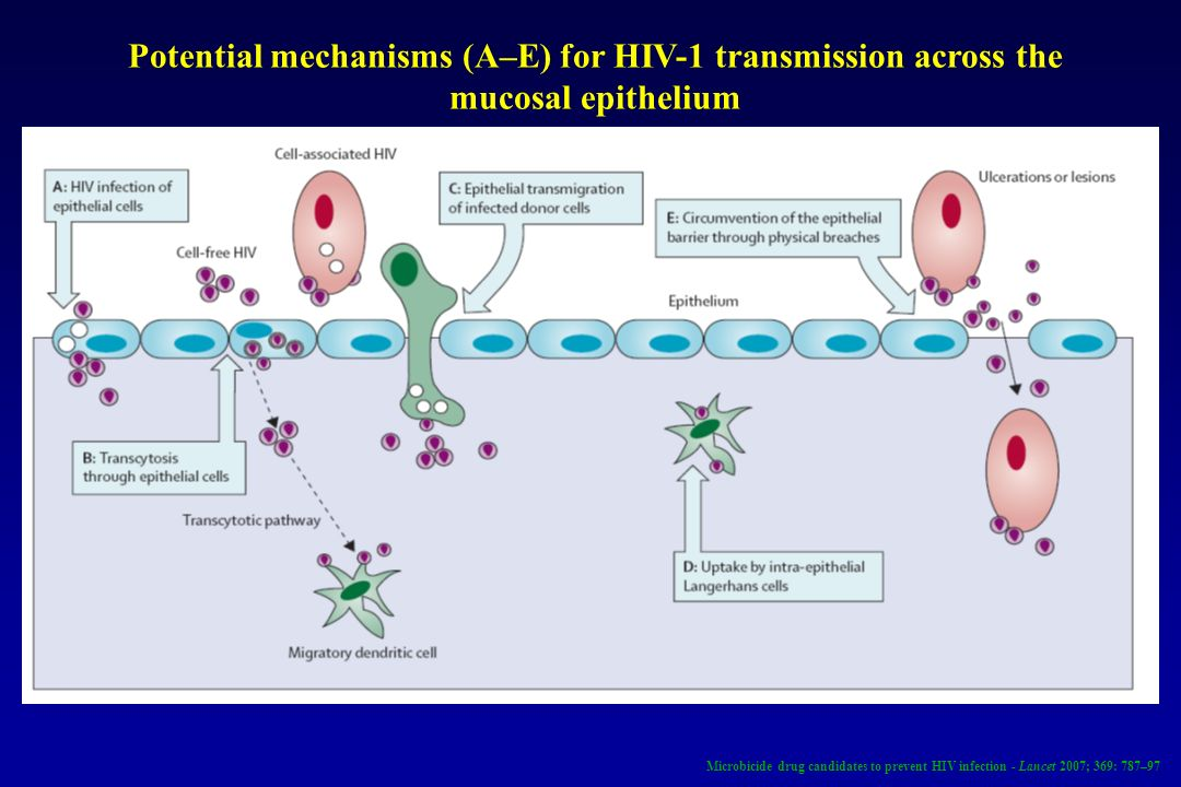 Potential mechanisms (A–E) for HIV-1 transmission across the mucosal epithelium Microbicide drug candidates to prevent HIV infection - Lancet 2007; 36