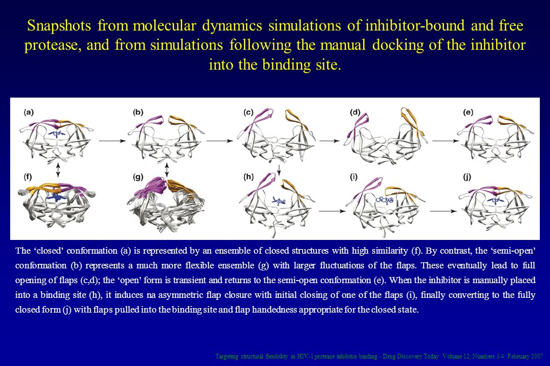Snapshots from molecular dynamics simulations of inhibitor-bound and free protease, and from simulations following the manual docking of the inhibitor