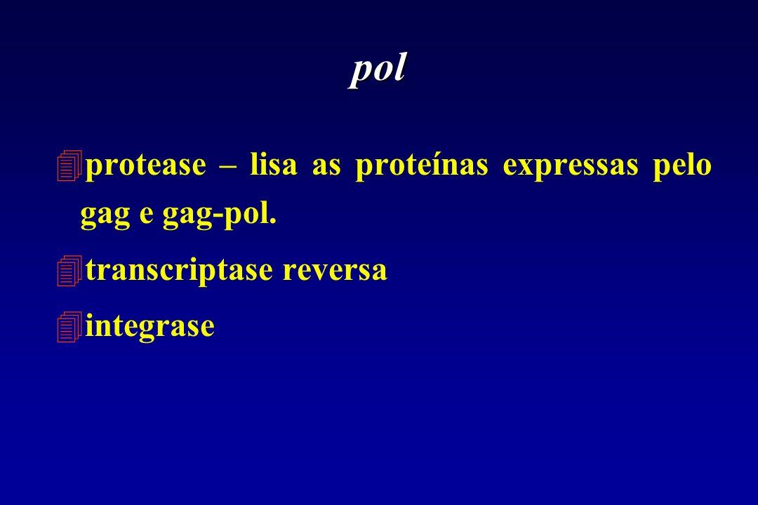pol 4protease – lisa as proteínas expressas pelo gag e gag-pol. 4transcriptase reversa 4integrase