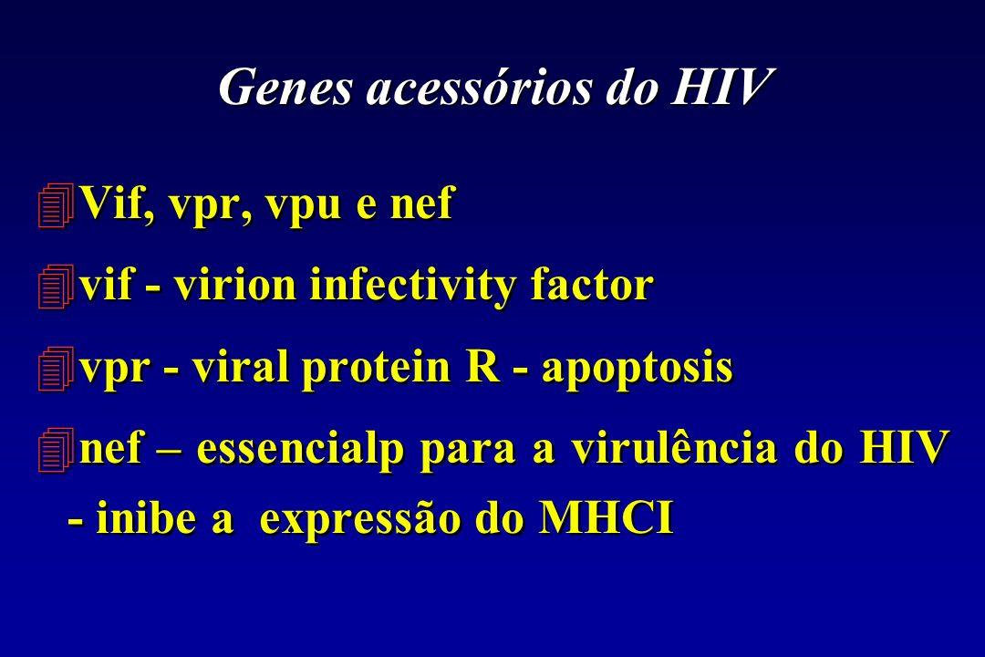 Genes acessórios do HIV 4Vif, vpr, vpu e nef 4vif - virion infectivity factor 4vpr - viral protein R - apoptosis 4nef – essencialp para a virulência d