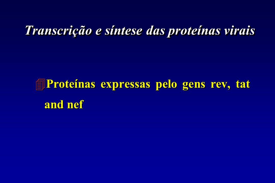 Transcrição e síntese das proteínas virais 4Proteínas expressas pelo gens rev, tat and nef