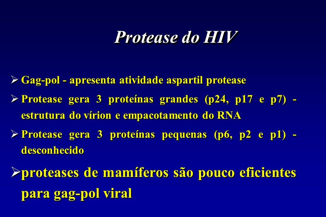 Protease do HIV Gag-pol - apresenta atividade aspartil protease Protease gera 3 proteínas grandes (p24, p17 e p7) - estrutura do vírion e empacotament