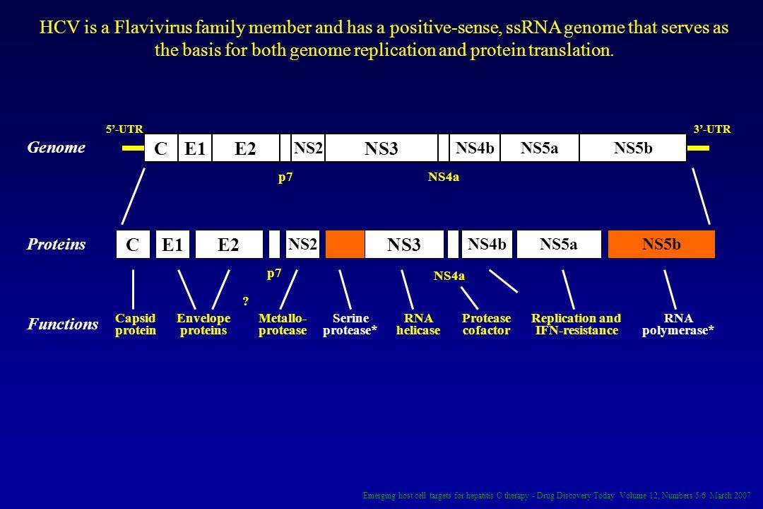 CE1E2 NS2 NS3 NS4bNS5aNS5b CE1E2 NS2 NS3 NS4bNS5aNS5b Genome Proteins Functions 5-UTR3-UTR Capsid protein Envelope proteins Metallo- protease Serine p