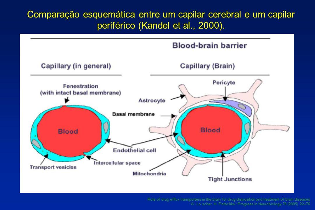 Comparação esquemática entre um capilar cerebral e um capilar periférico (Kandel et al., 2000). Role of drug efflux transporters in the brain for drug