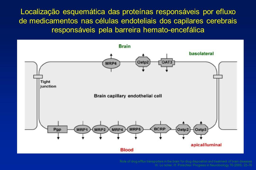 Localização esquemática das proteínas responsáveis por efluxo de medicamentos nas células endoteliais dos capilares cerebrais responsáveis pela barrei