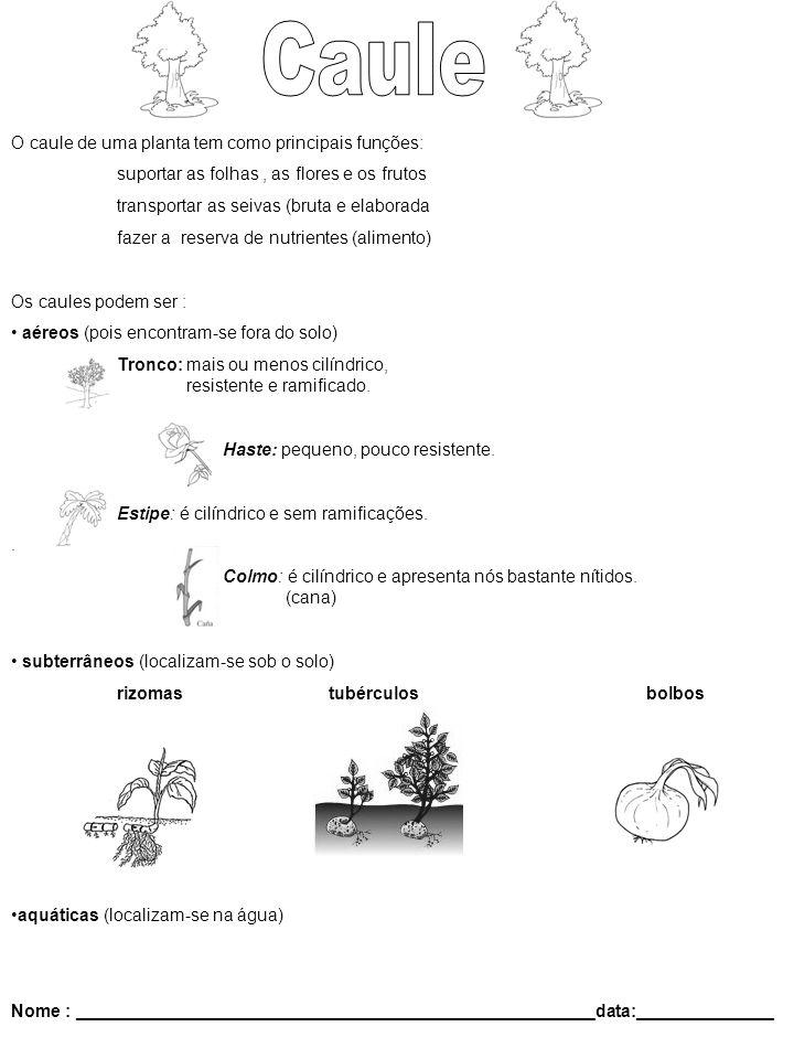 O caule de uma planta tem como principais funções: suportar as folhas, as flores e os frutos transportar as seivas (bruta e elaborada fazer a reserva