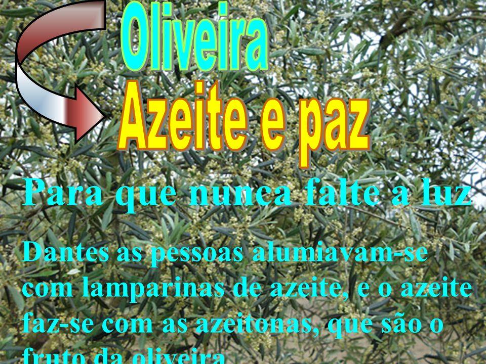 Para que nunca falte a luz Dantes as pessoas alumiavam-se com lamparinas de azeite, e o azeite faz-se com as azeitonas, que são o fruto da oliveira