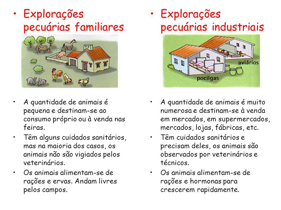 Explorações pecuárias familiares A quantidade de animais é pequena e destinam-se ao consumo próprio ou à venda nas feiras. Têm alguns cuidados sanitár