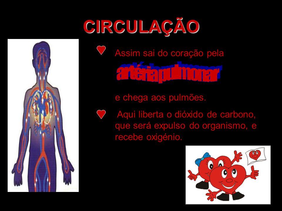 CIRCULAÇÃO Assim sai do coração pela e chega aos pulmões. Aqui liberta o dióxido de carbono, que será expulso do organismo, e recebe oxigénio.