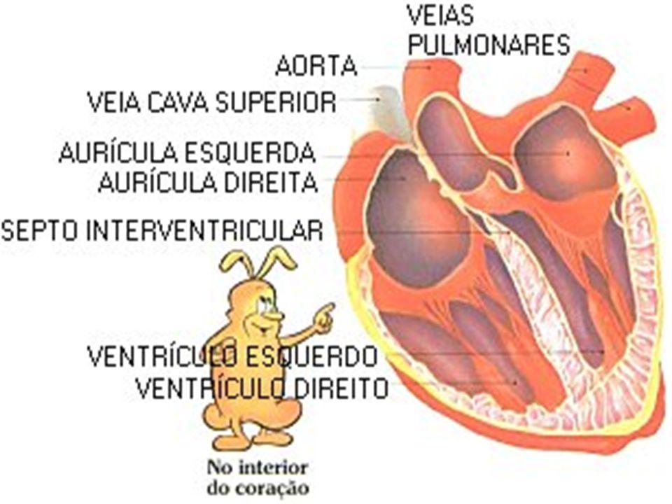 SISTEMA CIRCULATÓRIO O sangue circula por todo o corpo em tubos chamados vasos sanguíneos (artérias, veias e vasos capilares ).