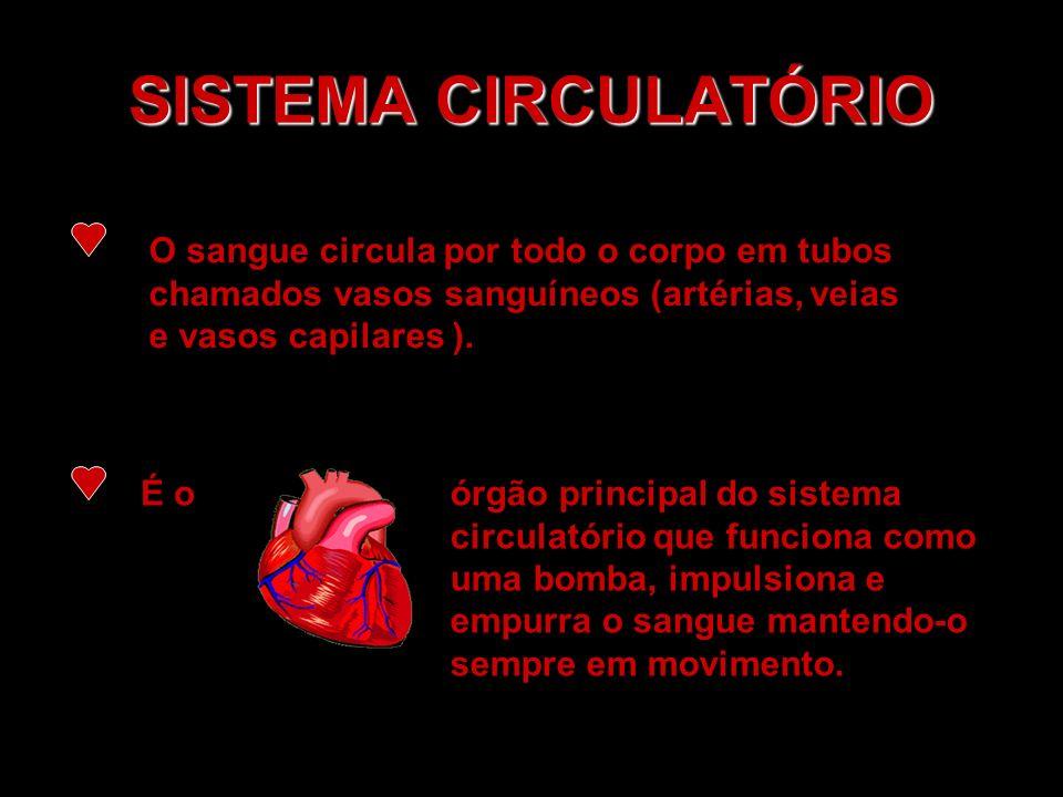 SISTEMA CIRCULATÓRIO O sangue circula por todo o corpo em tubos chamados vasos sanguíneos (artérias, veias e vasos capilares ). É o órgão principal do