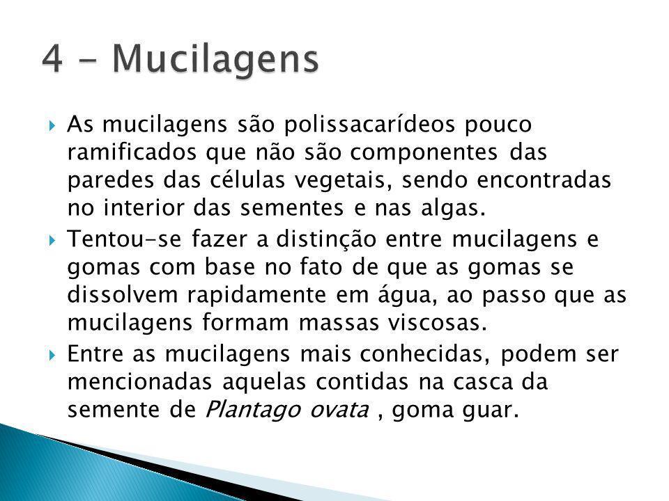 As mucilagens são polissacarídeos pouco ramificados que não são componentes das paredes das células vegetais, sendo encontradas no interior das sementes e nas algas.