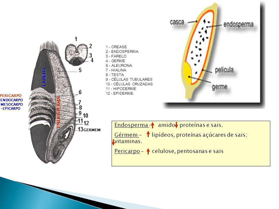 GERMEM ENDOSPERMA PERICARPO -ENDOCARPO -MESOCARPO -EPICARPO FARELO 1 - CREASE 2 - ENDOSPERMA 3 - FARELO 4 - GERME 6 - ALEURONA 7 - HIALINA 8 - TESTA 9 - CÉLULAS TUBULARES 10 - CÉLULAS CRUZADAS 11 - HIPODERME 12 - EPIDERME Endosperma – amido proteínas e sais.