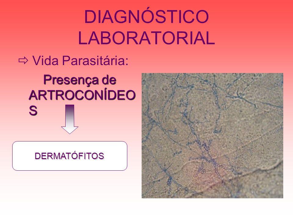 DIAGNÓSTICO LABORATORIAL Vida Parasitária: Presença de ARTROCONÍDEO S DERMATÓFITOS