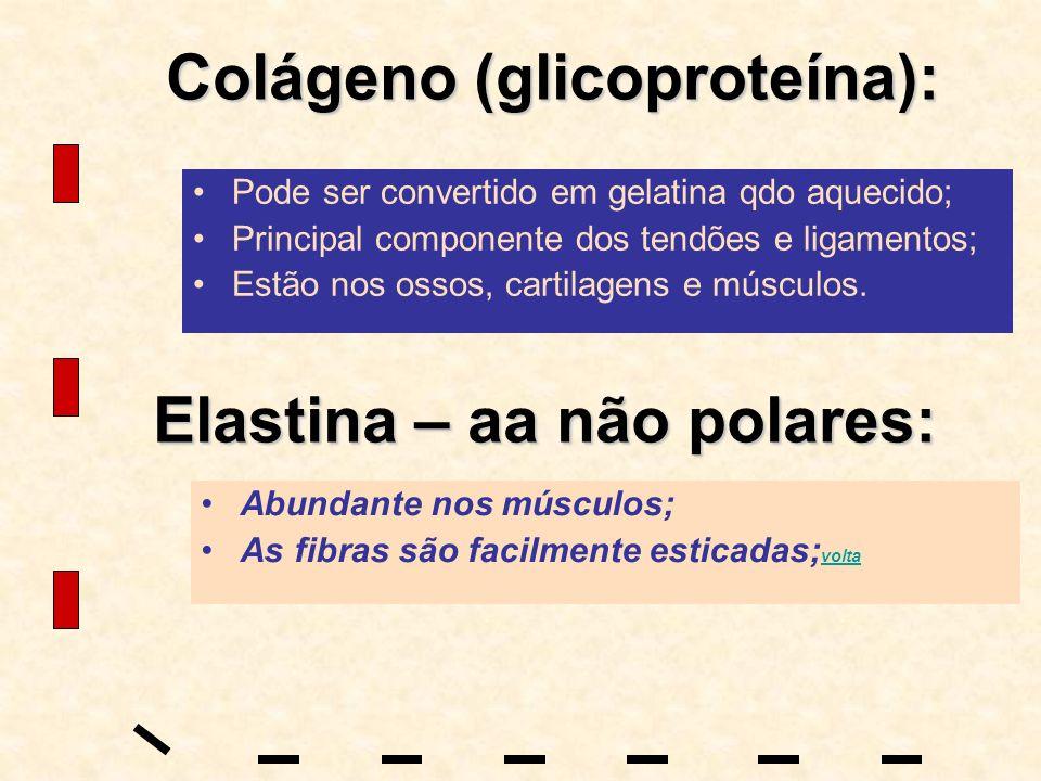Colágeno (glicoproteína): Pode ser convertido em gelatina qdo aquecido; Principal componente dos tendões e ligamentos; Estão nos ossos, cartilagens e