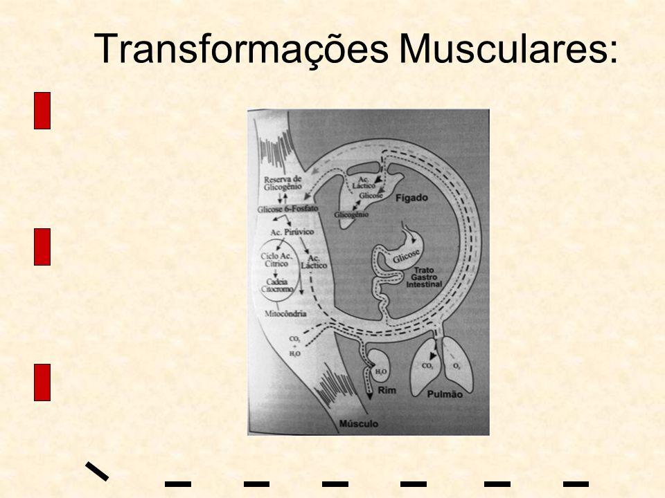 Transformações Musculares: