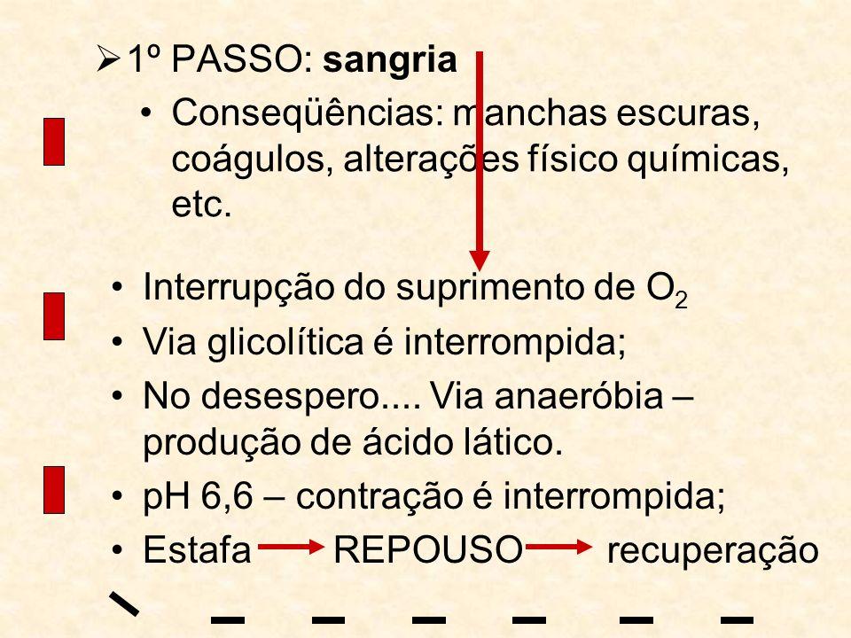 1º PASSO: sangria Conseqüências: manchas escuras, coágulos, alterações físico químicas, etc. Interrupção do suprimento de O 2 Via glicolítica é interr